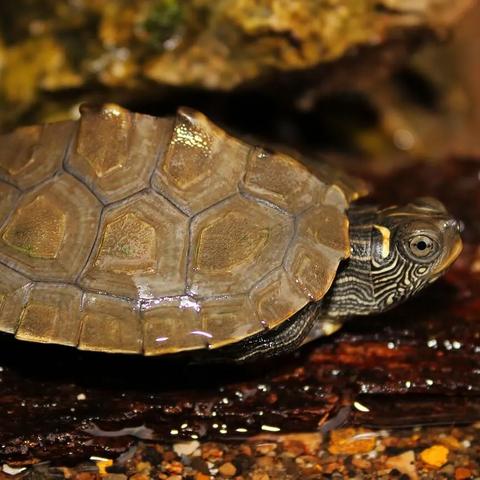 mississippi-map-turtle-1920w-480w